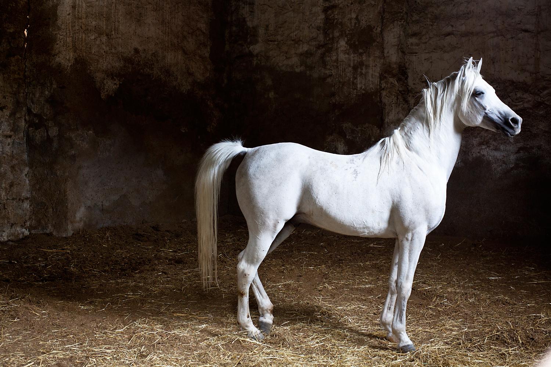 White-horse